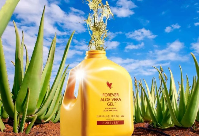 Image result for forever living products with Aloe Vera